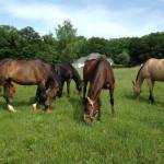 river road horse farm hinckley, OH horse back riding lessons